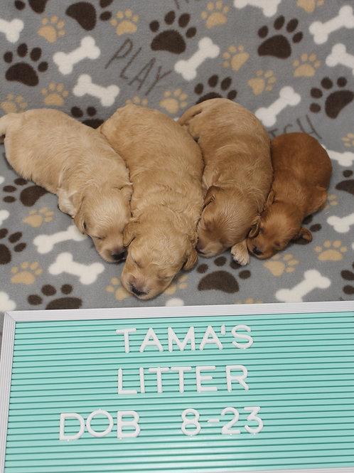 Tama's Litter