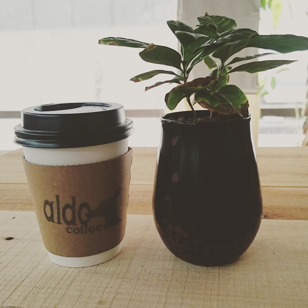 アルドコーヒーをお出しします。