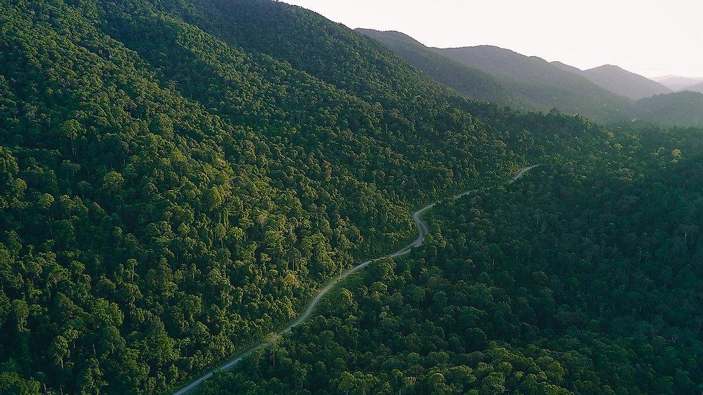 Rainforest Conservation
