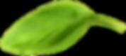 Basil Leaf7.png