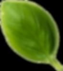 Basil Leaf5.png