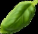Basil Leaf10.png