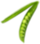Basil Leaf9.png
