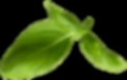 Basil Leaf12.png