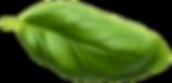 Basil Leaf15.png