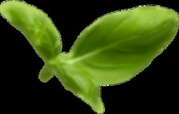 Basil Leaf4.png
