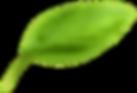 Basil Leaf8.png
