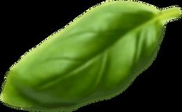 Basil Leaf6.png