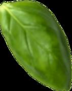 Basil Leaf11.png