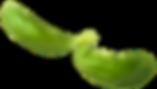 Basil Leaf3.png