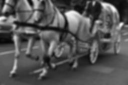 wedding photography horse and carridge black and white animals