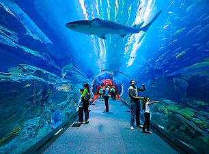 Underwaterzoo.jpg