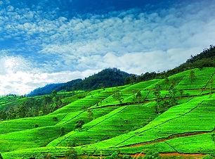 Nuwara.jpg