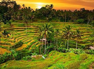 Ubud Bali.jpg