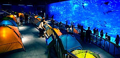 SEA Aquarium.jpg