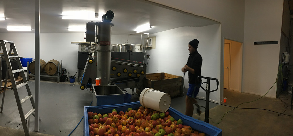 A bin of apples in front of a voran apple mill and press.