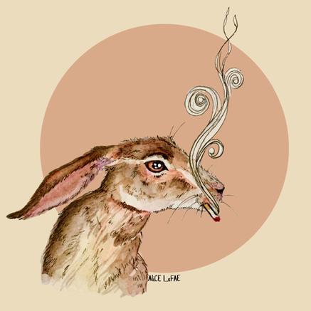 A Bad Rabbit