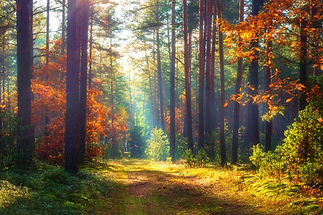 Amazing autumn forest in morning sunligh