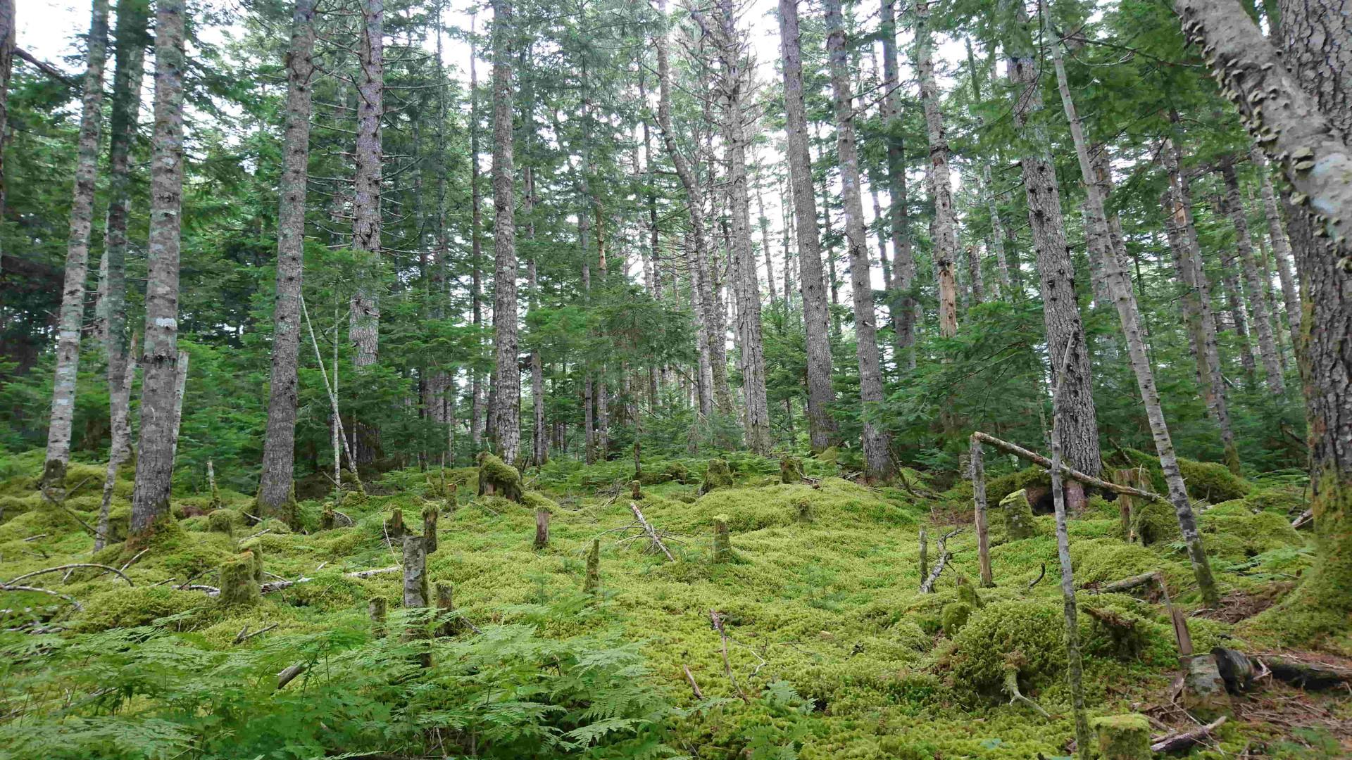 а лес  на берегу озера довольно густой