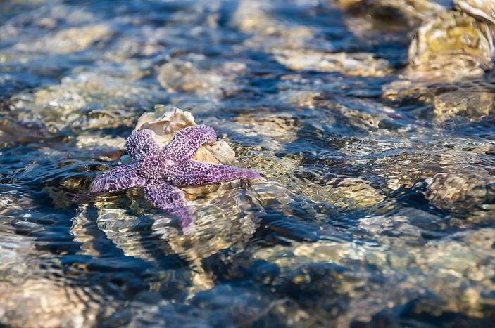 Морская звезда на Буссе