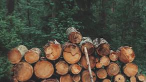 Good Timber by Douglas Malloch