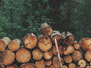 Bekanntmachung zu Brennholzbedarf