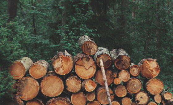 The Wood Pile Made Me Cry: fight the epidemic of narcissism...
