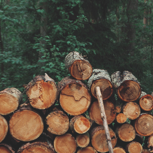 Exploring the links between the practices of forestry cooperatives and the SDGs