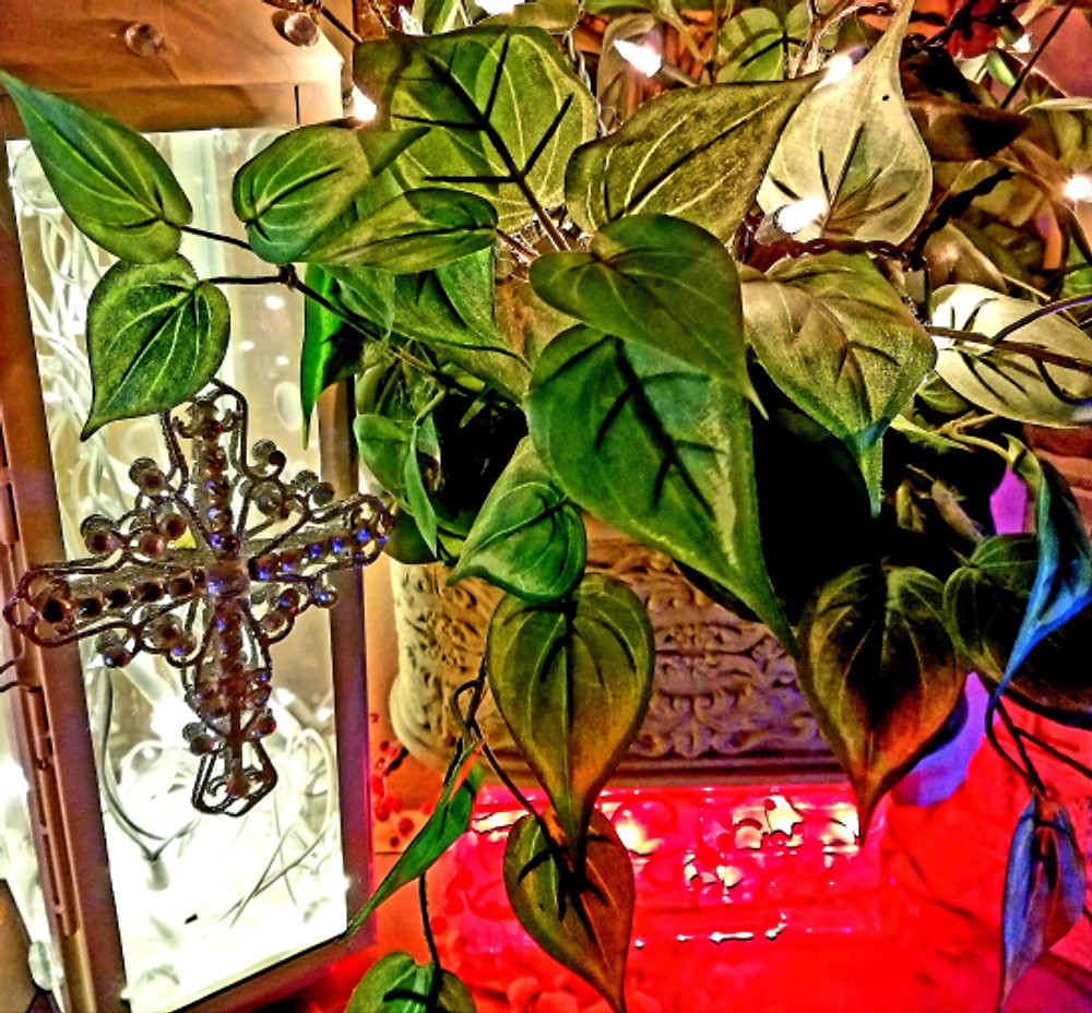 cross plant