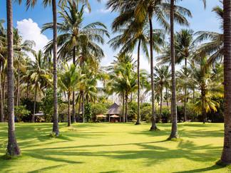 9. The Anandita - Fresh coconuts everyda