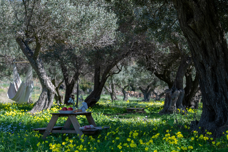 Picnic table and hammock under olives 23