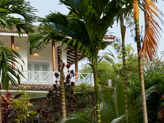15-Pooja Kanda - Through the palms.jpg