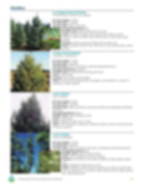 Conservation Trees and Shrubs for Montan