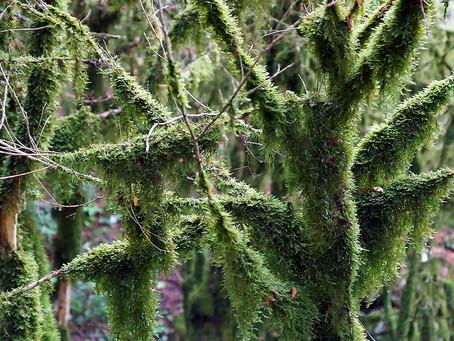 Зачарованный лес...