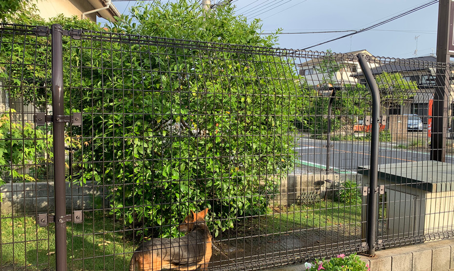 ドッグランのレモンの木