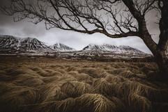 Birki Skagafjörður-1-2