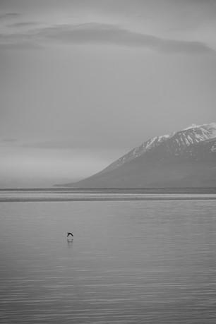 Stokkönd í Eyjafirði