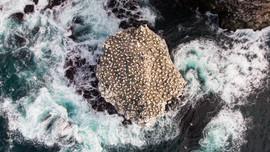 Skoravíkurbjarg