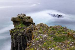 Sveinsstaðarani í Grímsey