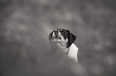 Hundur - Dog