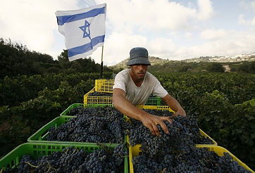 Israel wine route