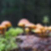 kleine-pilz-landschaft.jpg