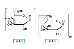 Polysaccharide.png