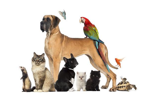 Tiere.jpg