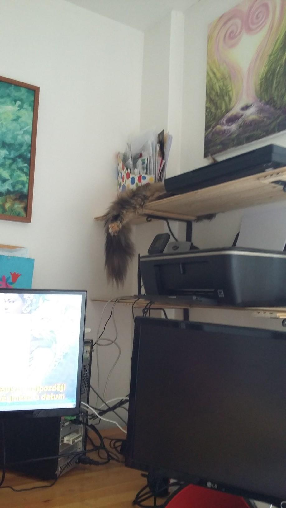 A, kdo vidí kočku na obrázku?