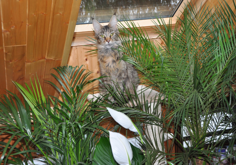 kočka v pralese