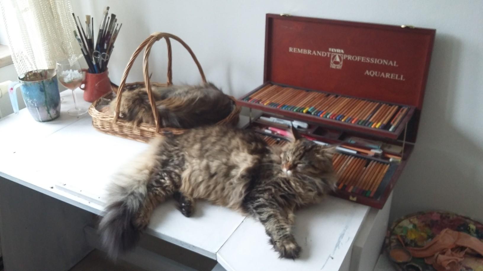 kočka, kam se podíváš