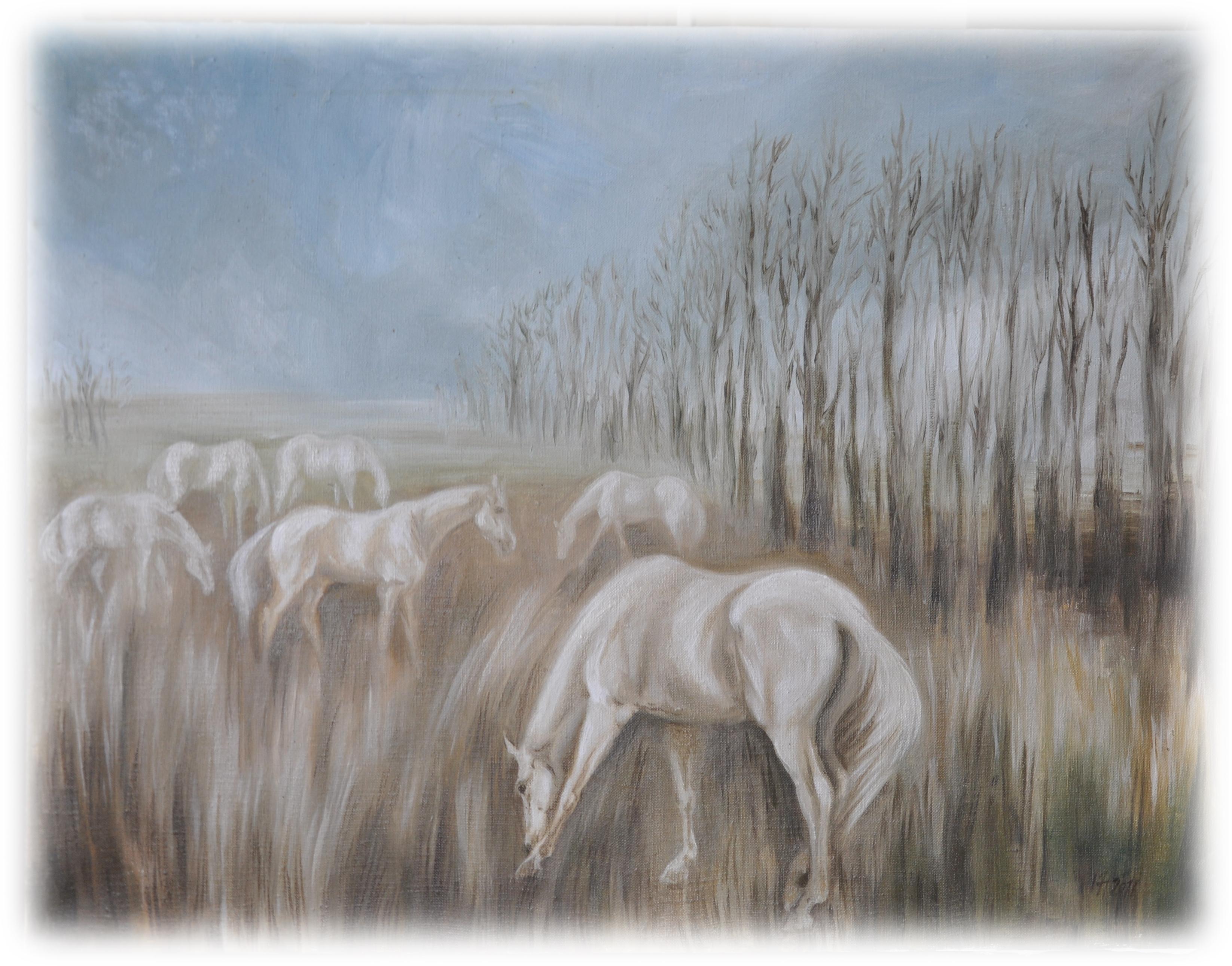 bílí koně na pastvině