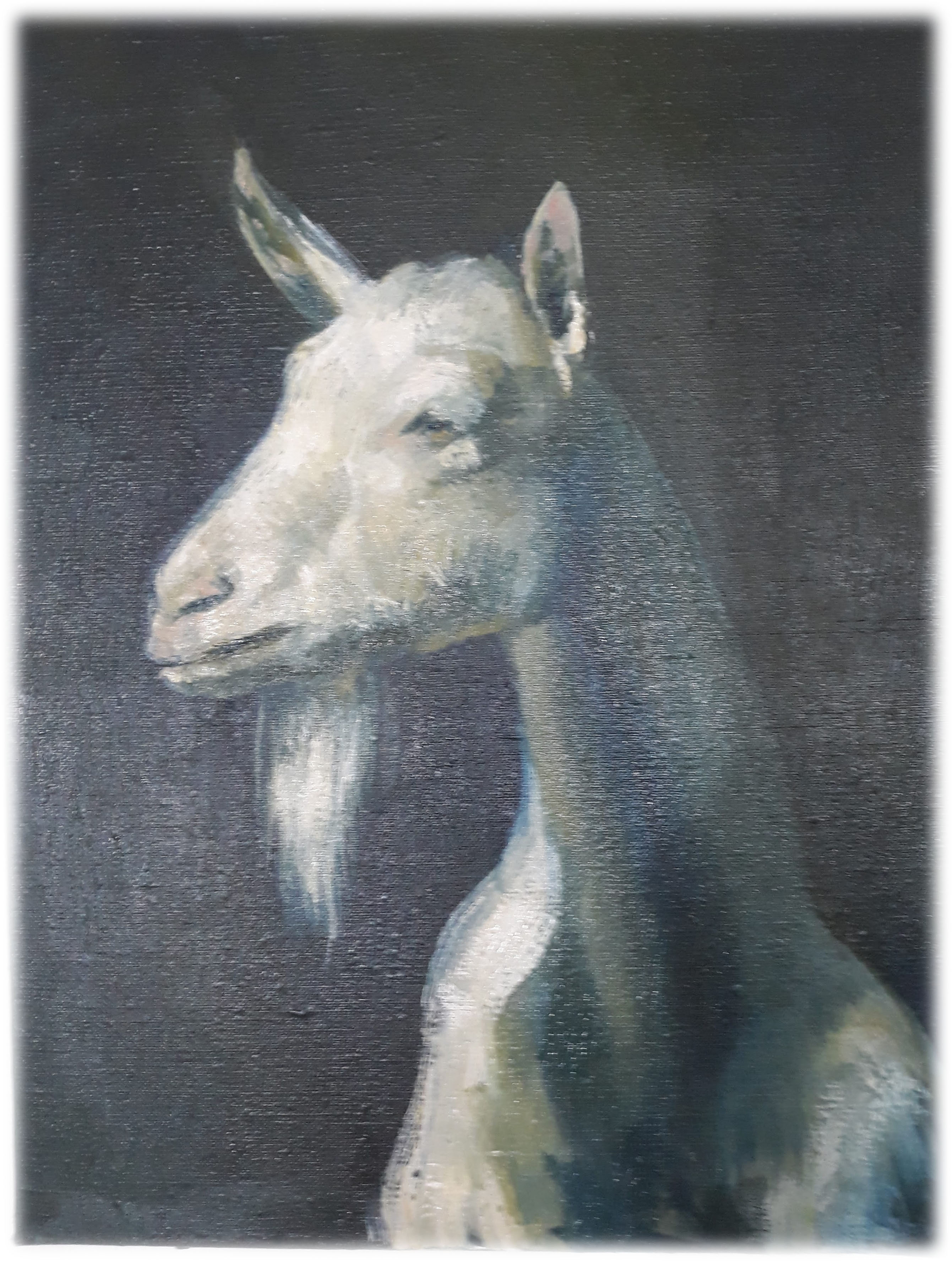 koza-portrét