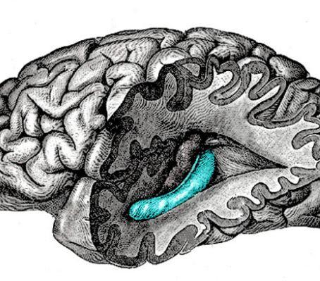 Hafıza Testi Sırasındaki Hipokampal Aktivite Nelerin Hatırlanacağı Konusunda İpuçları Verebilir Mi?